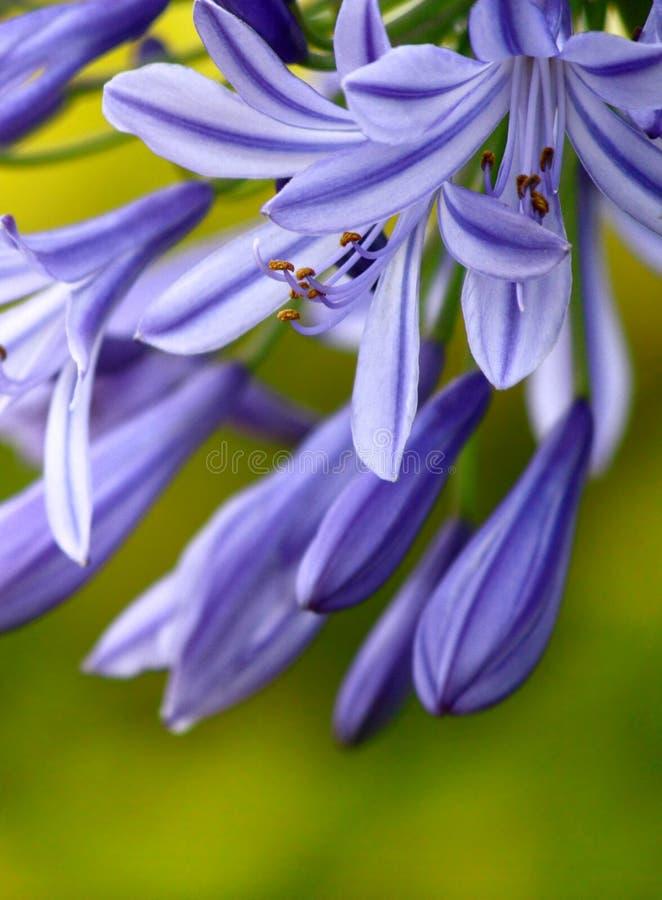 Blommor Gratis Arkivbild