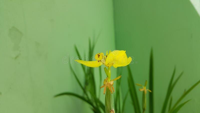 Blommor arkivfoton