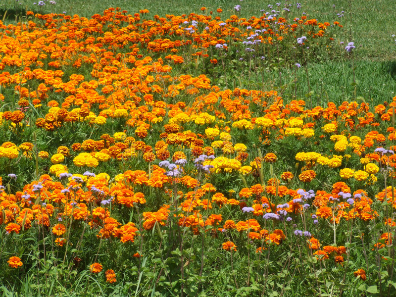 Download Blommor fotografering för bildbyråer. Bild av valentin - 991655