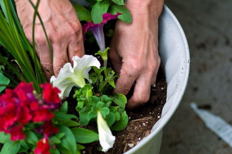 blommor arbeta i trädgården att plantera royaltyfria bilder