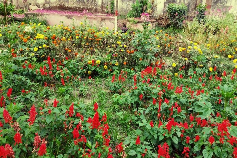 Blommor arbeta i trädgården i Bangladesh royaltyfria bilder