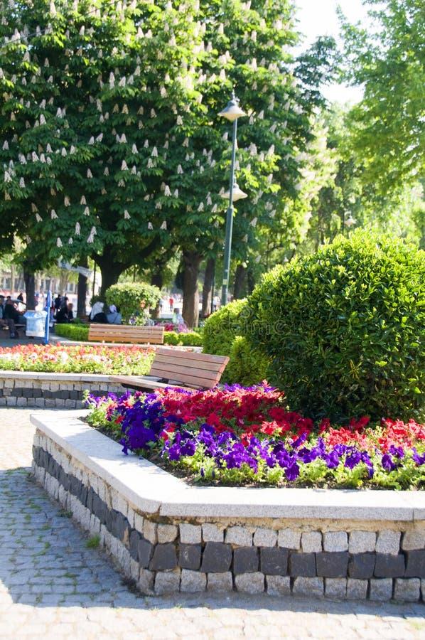 blommor arbeta i trädgården den hippodromeistanbul parken arkivfoto