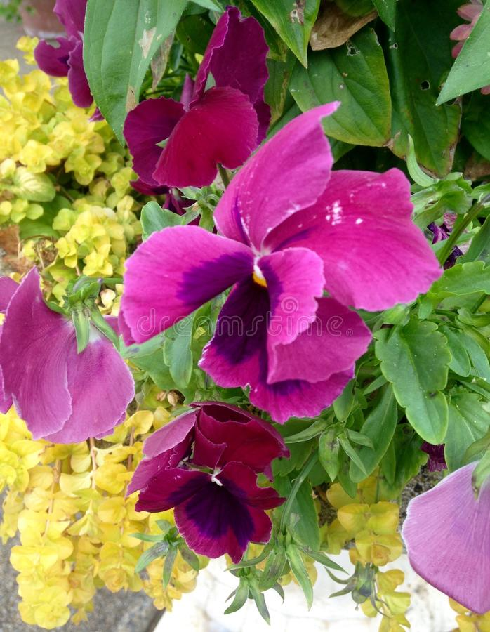 blommor arbeta i trädgården mitt royaltyfri foto