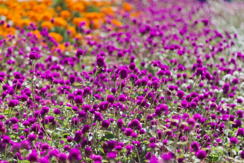 blommor arbeta i trädgården orange pink fotografering för bildbyråer