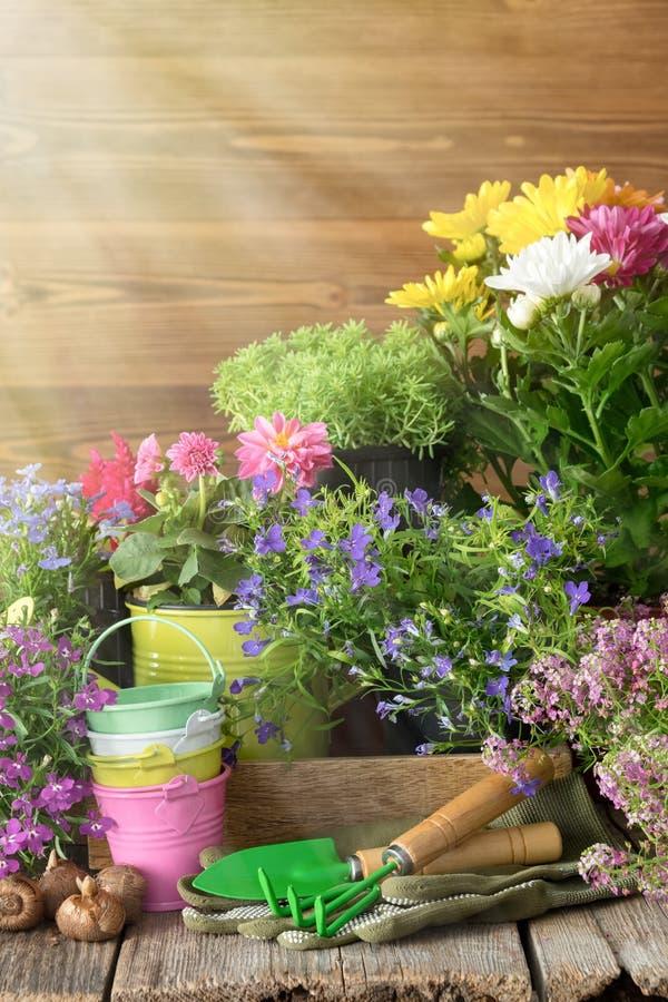 blommor arbeta i trädgården växter Att bevattna kan, hinkar, skyffel, att kratta arkivbilder