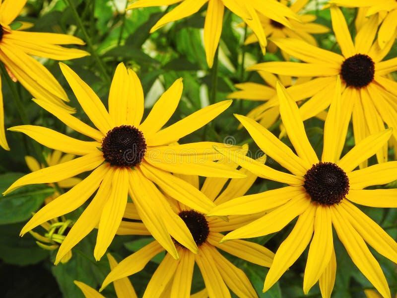 blommor arbeta i trädgården yellow royaltyfria foton