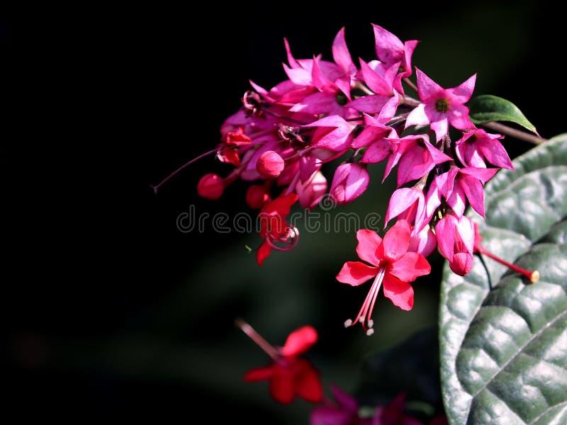 blommor arbeta i tr?dg?rden pink royaltyfri bild