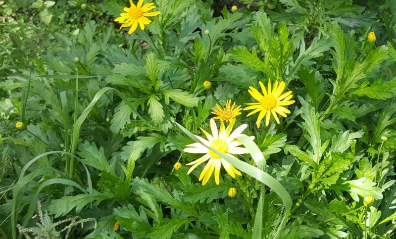blommor arbeta i tr?dg?rden yellow Sk?nheten i natur arkivbilder