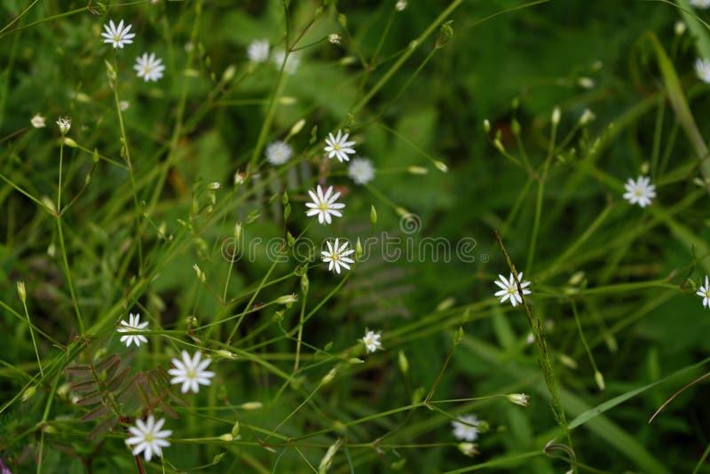 Blommor av ängslig natur Naturlig sommarbakgrund med blommor i ängen i morgonens solstrålar Bakgrund för morgonfält royaltyfria foton