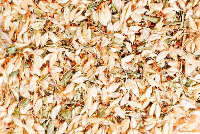 Blommor av astragalusen rotar örten som används i kinesisk växt- medicin arkivbilder