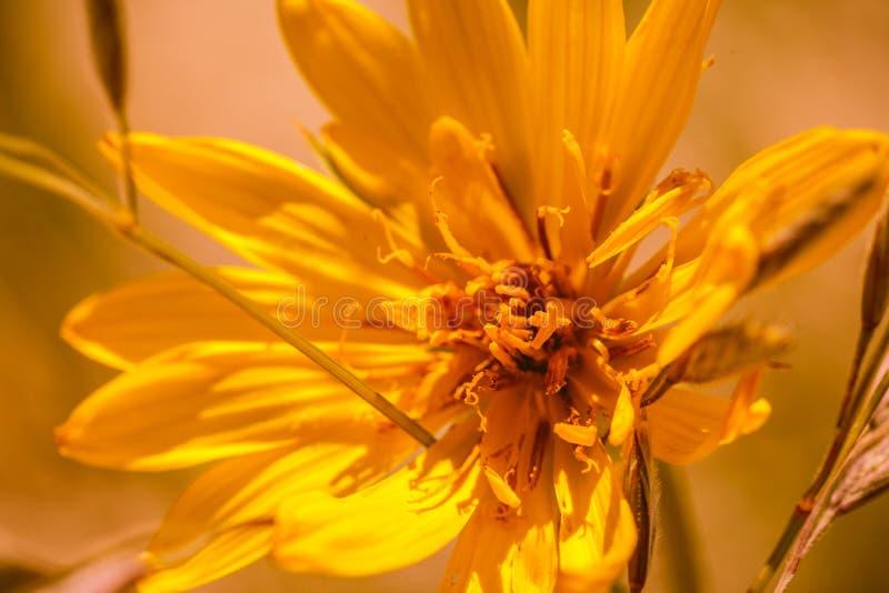 Blommor av dyn royaltyfri bild