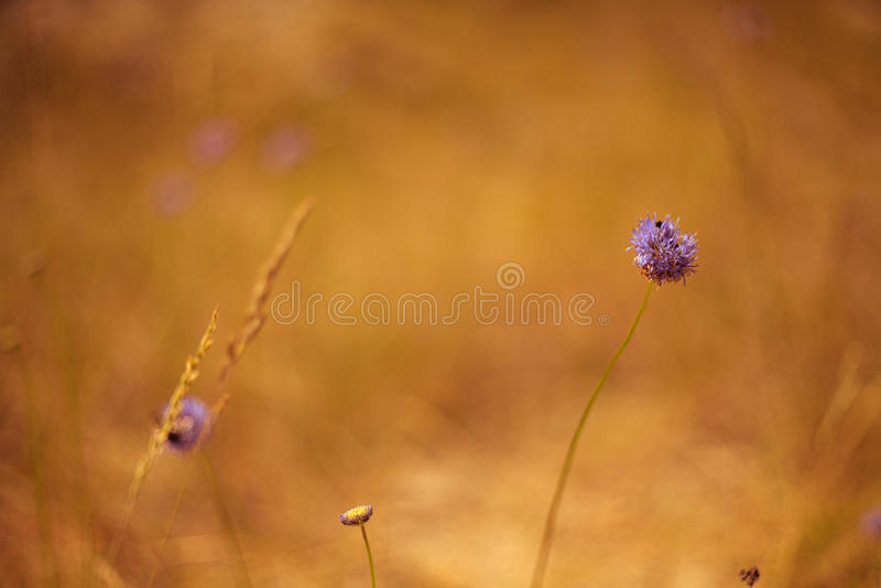 Blommor av dyn arkivfoton