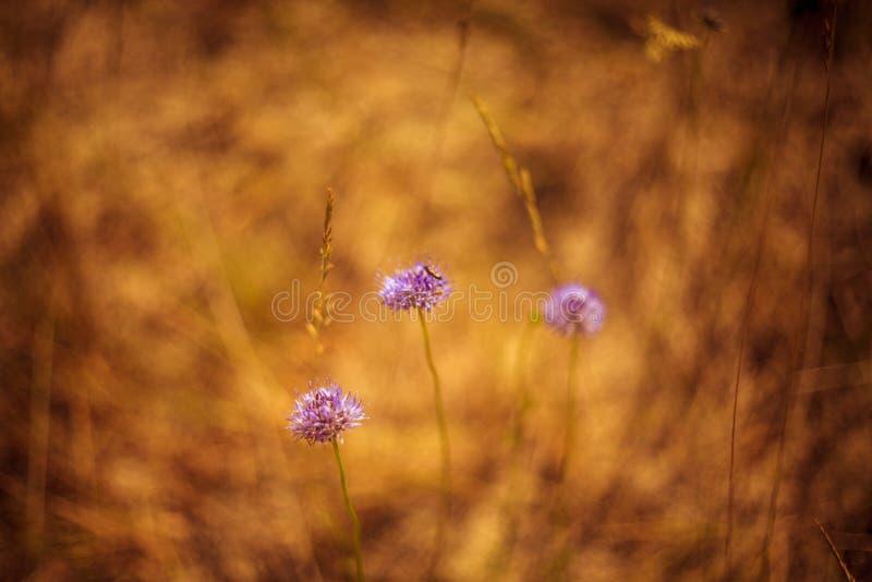 Blommor av dyn arkivfoto