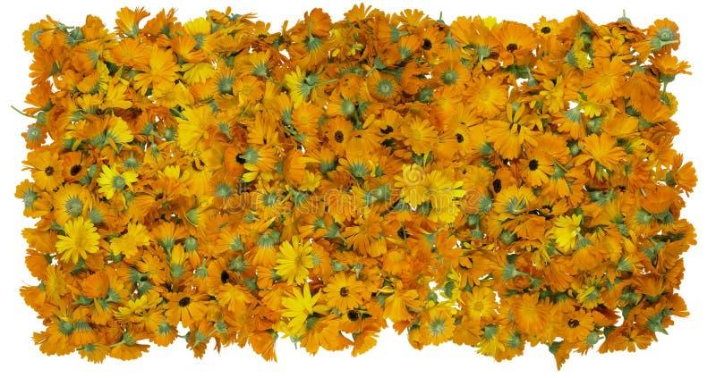 Blommor av en medicinsk calendulabakgrund fotografering för bildbyråer