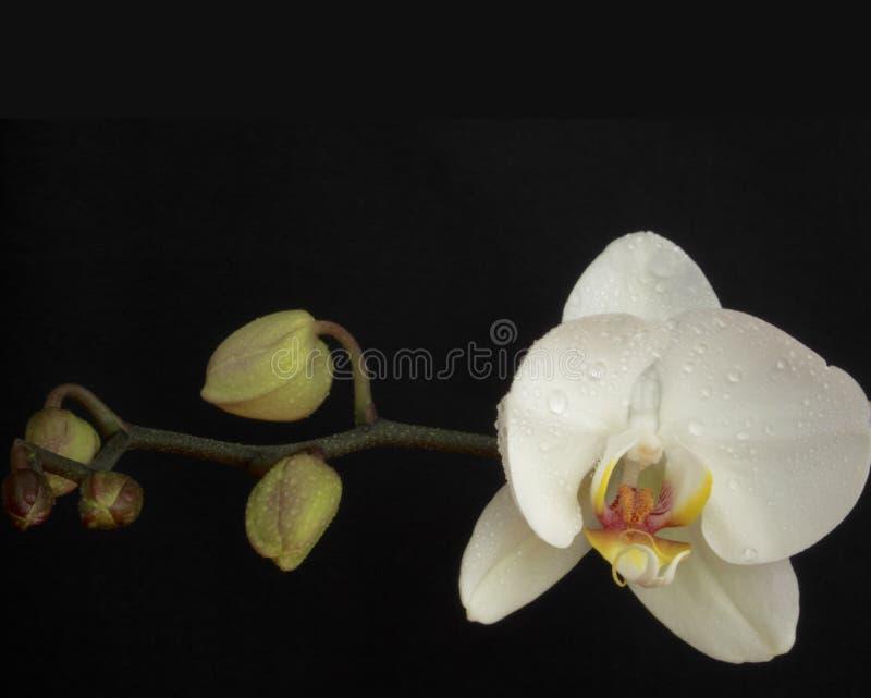 blommor av förälskelse royaltyfria bilder
