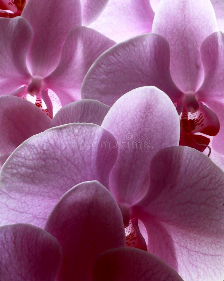 blommor av förälskelse royaltyfri bild
