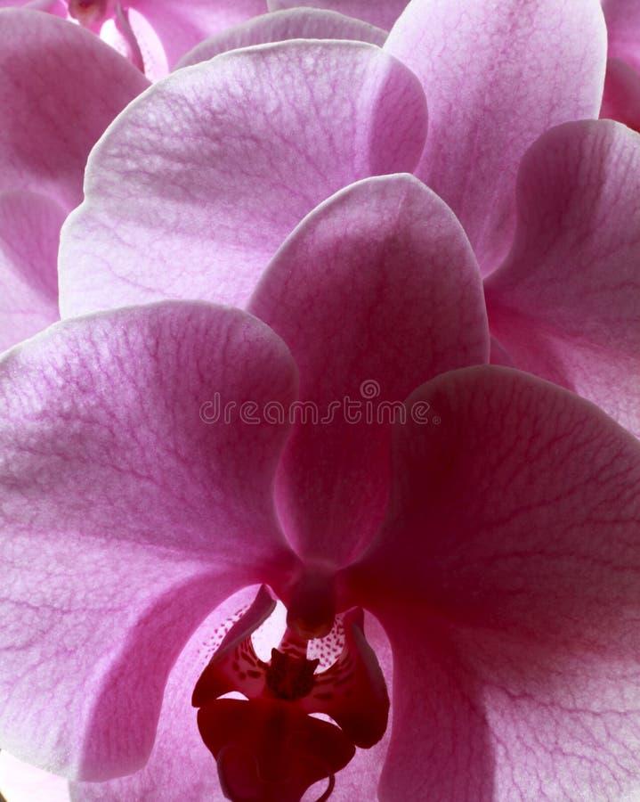 blommor av förälskelse royaltyfri foto