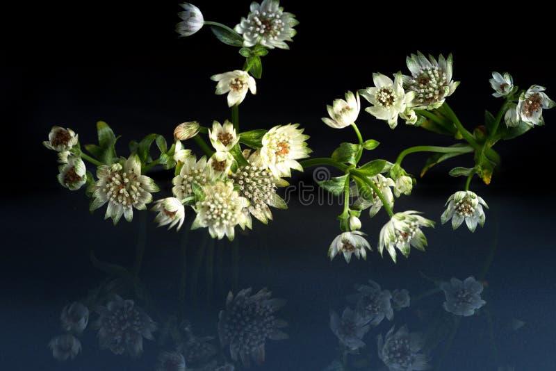 Blommor av fantastisk skönhet för djurliv royaltyfri foto
