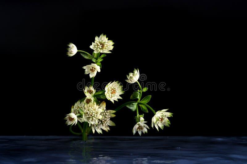 Blommor av fantastisk skönhet för djurliv arkivbild