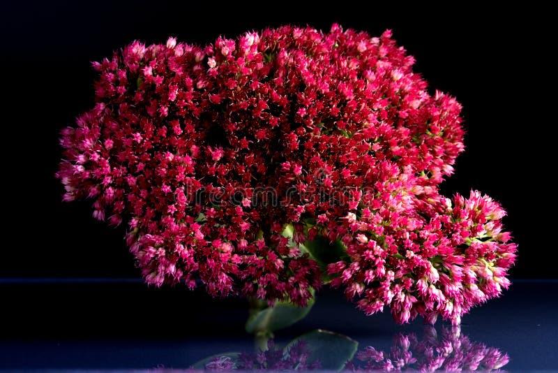 Blommor av fantastisk skönhet för djurliv royaltyfri bild