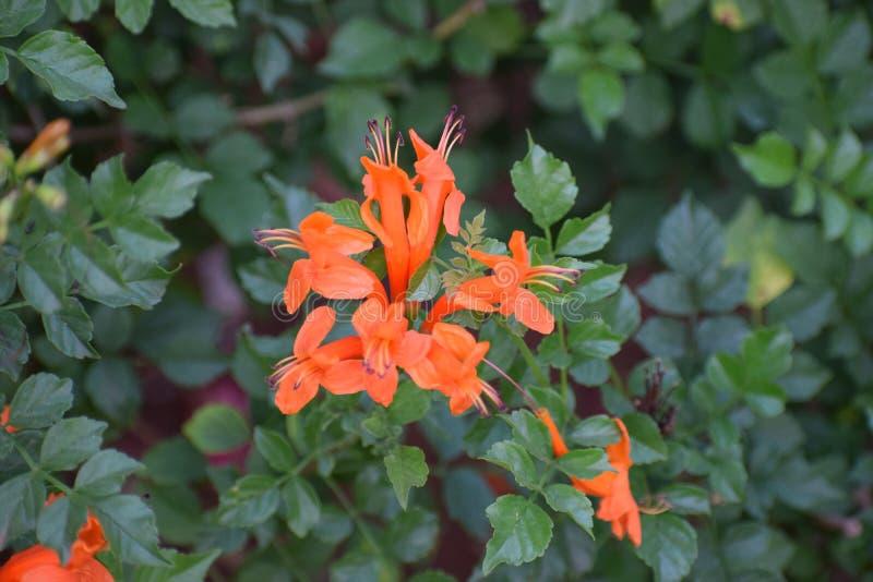Blommor av naturskönhet royaltyfri fotografi