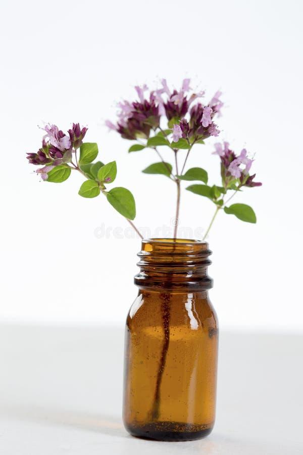 Blommor av oreganon i en flaska av nödvändig olja arkivbild