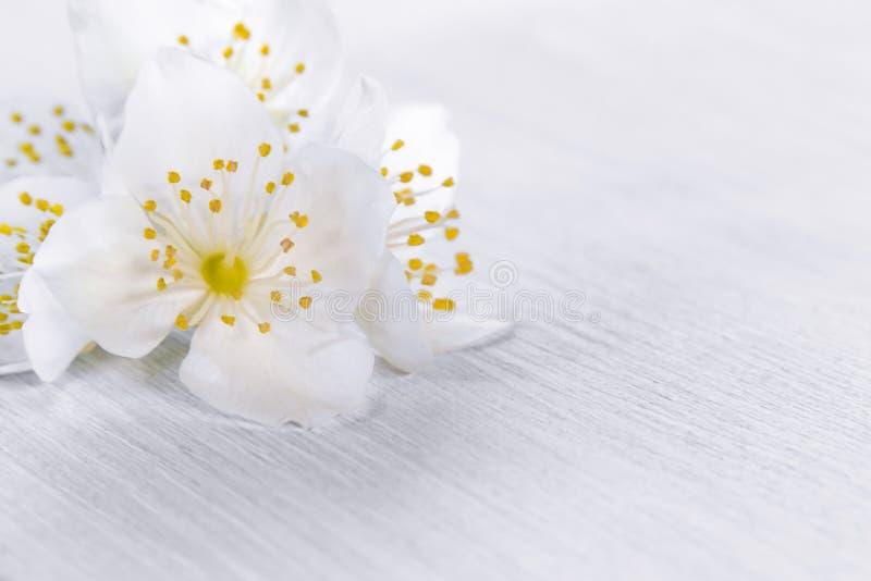 Blommor av philadelphusen någonstans kallade jasmin eller den falska apelsinen på en vit trätabell arkivfoto