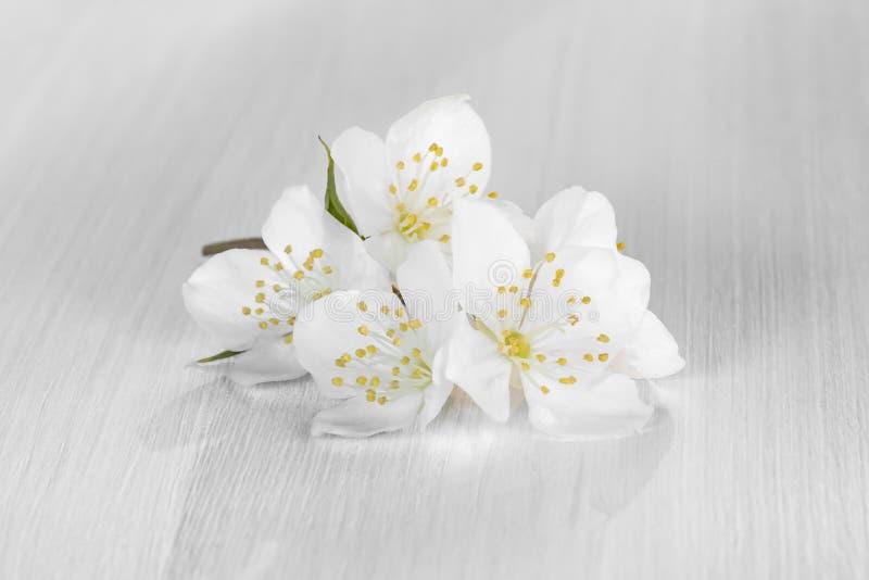 Blommor av philadelphusen någonstans kallade jasmin eller den falska apelsinen på en vit trätabell arkivfoton