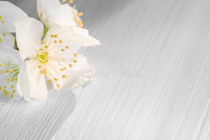 Blommor av philadelphusen någonstans kallade jasmin eller den falska apelsinen på en vit trätabell fotografering för bildbyråer