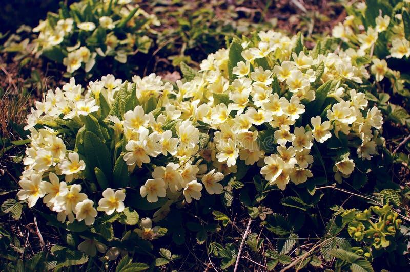 Blommor av skogen arkivbild