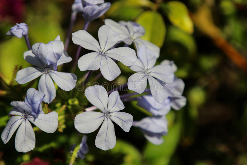 Blommor av Spanien arkivbilder