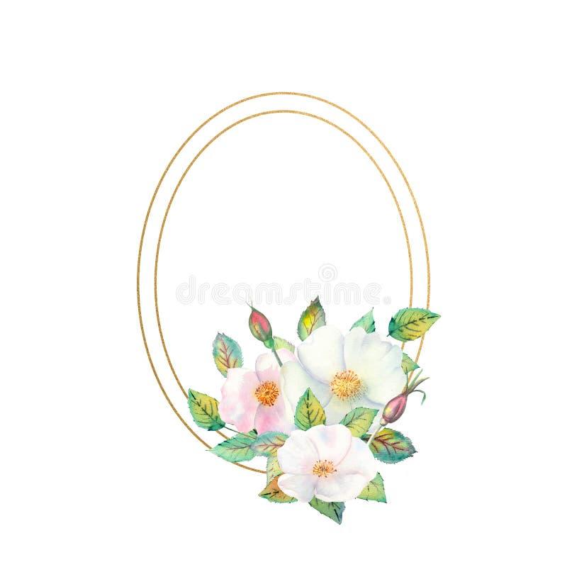 Blommor av vita rosa höfter, röda frukter, gröna sidor, sammansättningen i en geometrisk guld- ram Blommaaffisch, inbjudan royaltyfri illustrationer