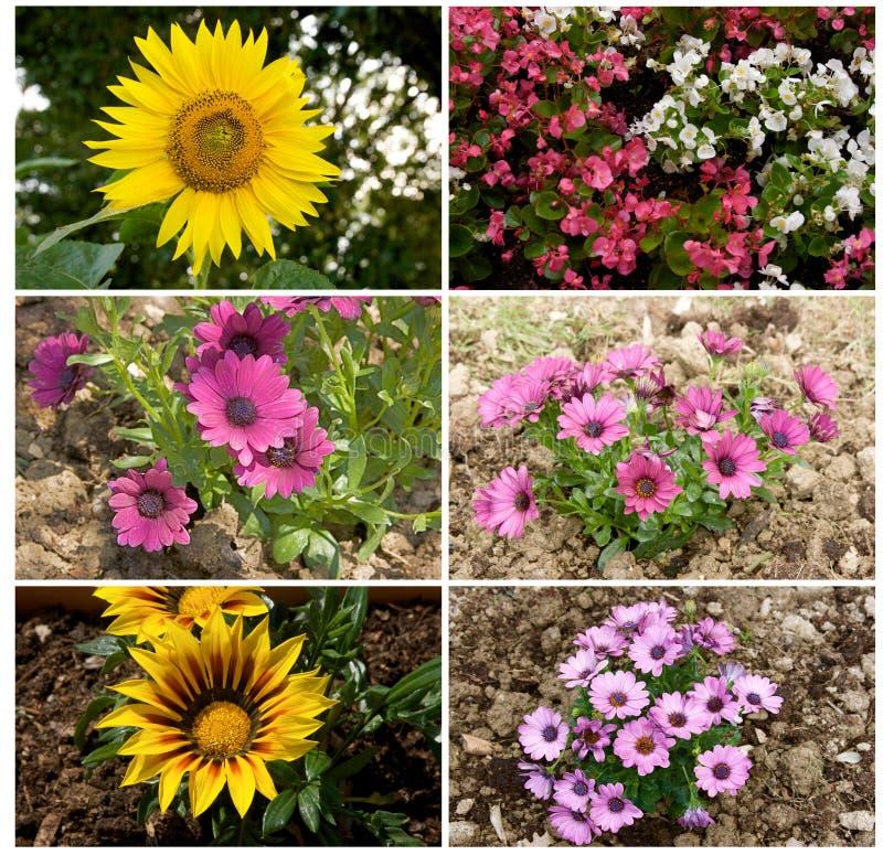 Blommor collage royaltyfria bilder