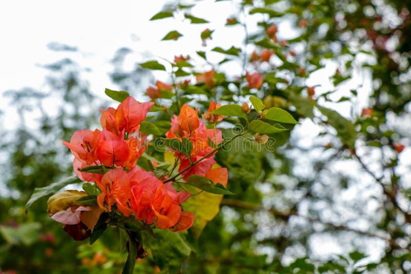 Blommor Delikata filialer Natur arkivfoto