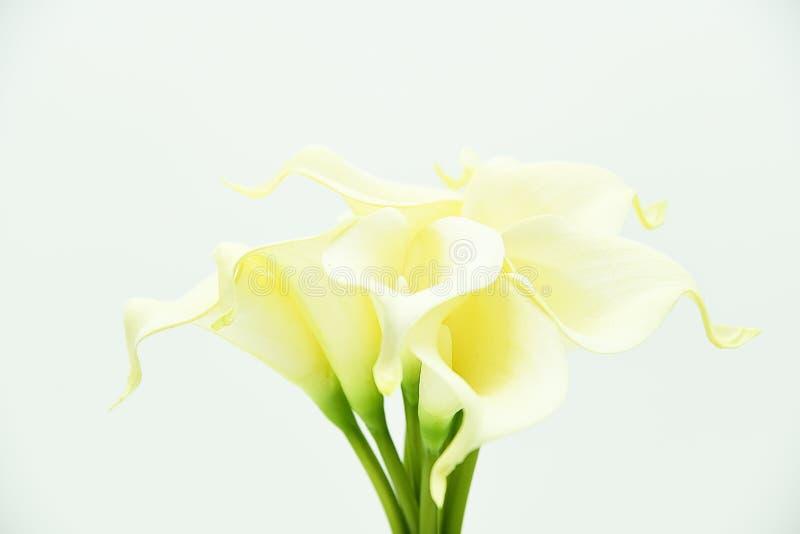 Blommor för Callalilja och konstgjorda stammar Olika blommor av callaliljan som isoleras på vit royaltyfria bilder