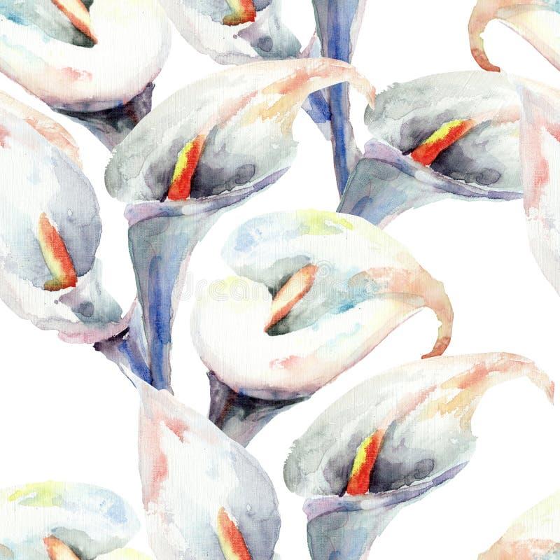 Blommor för Callalilja, vattenfärgillustration stock illustrationer