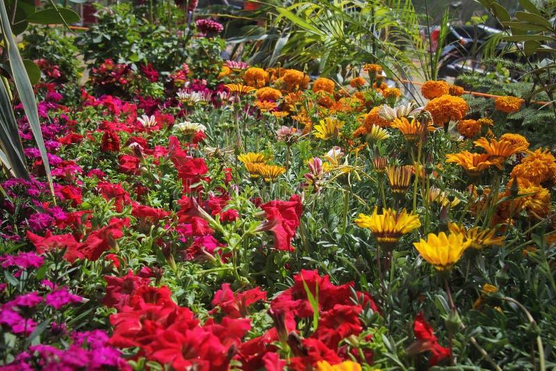 Blommor för härlig bakgrund royaltyfria foton