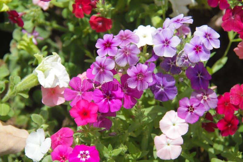 Blommor för härlig bakgrund arkivbilder