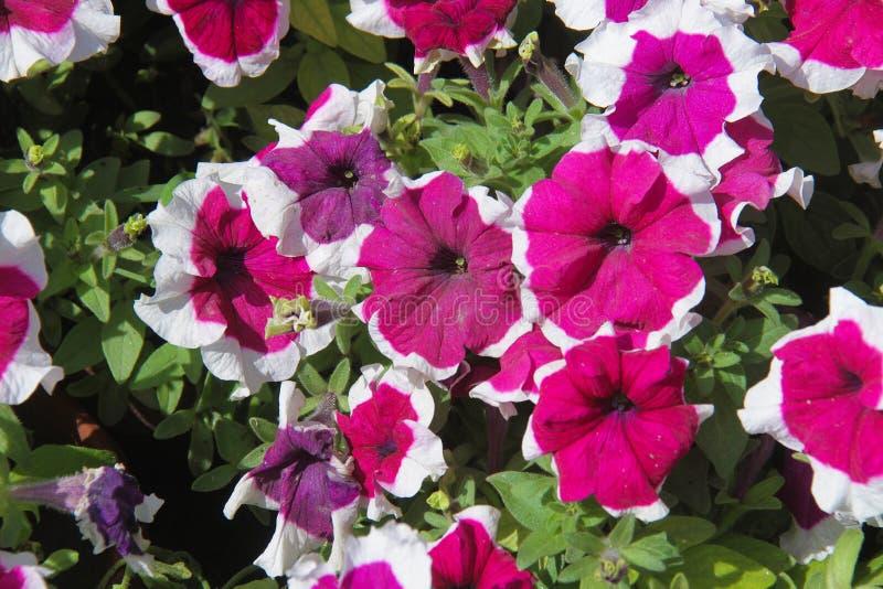 Blommor för härlig bakgrund arkivbild