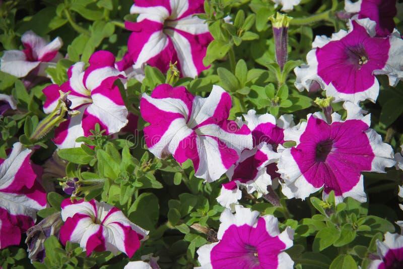 Blommor för härlig bakgrund royaltyfri fotografi