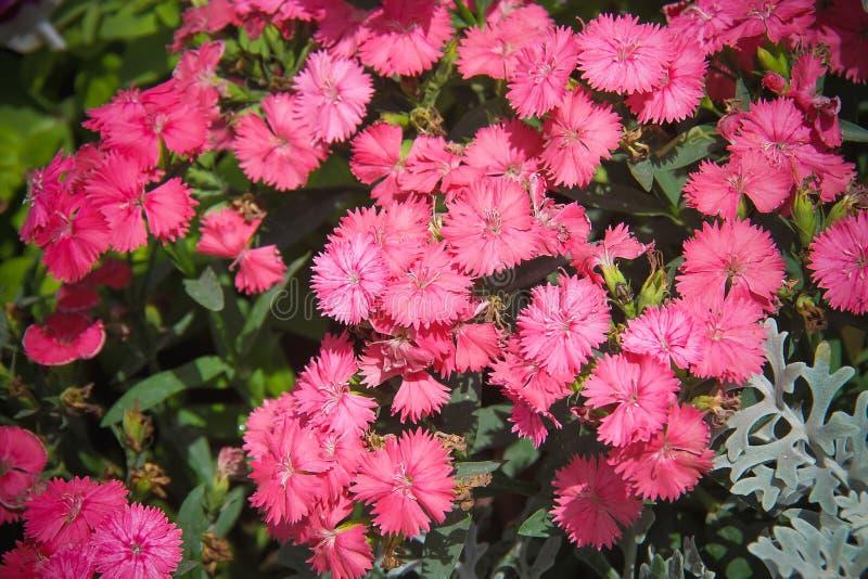 Blommor för härlig bakgrund royaltyfri bild
