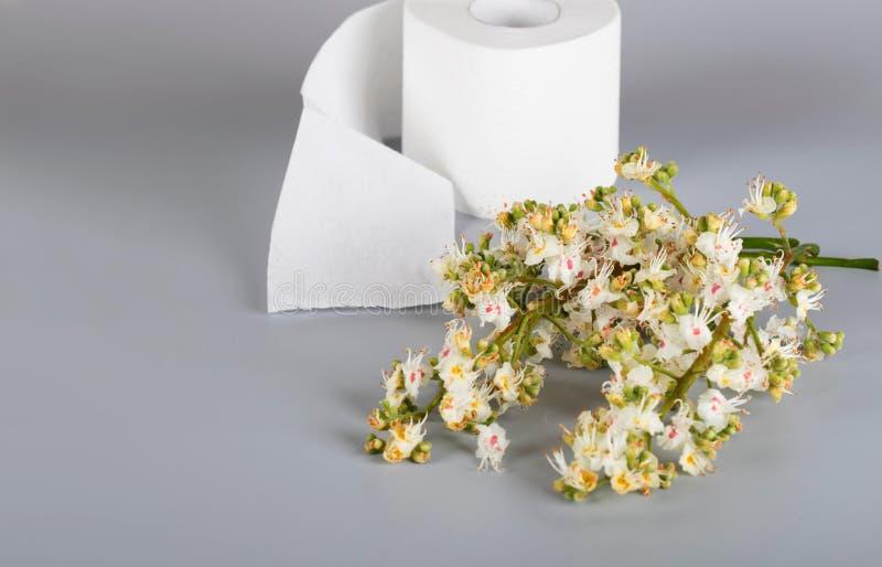 Blommor för hästkastanj på en grå yttersida Rulle av toalettpapper I royaltyfri foto