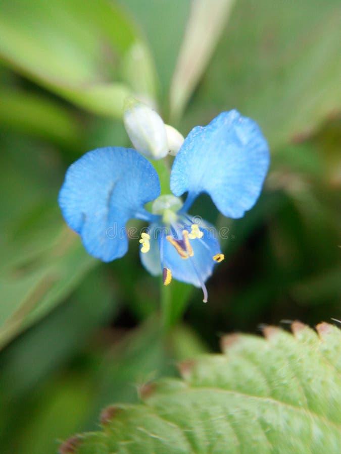 Blommor 01 för hemlig trädgård arkivbilder