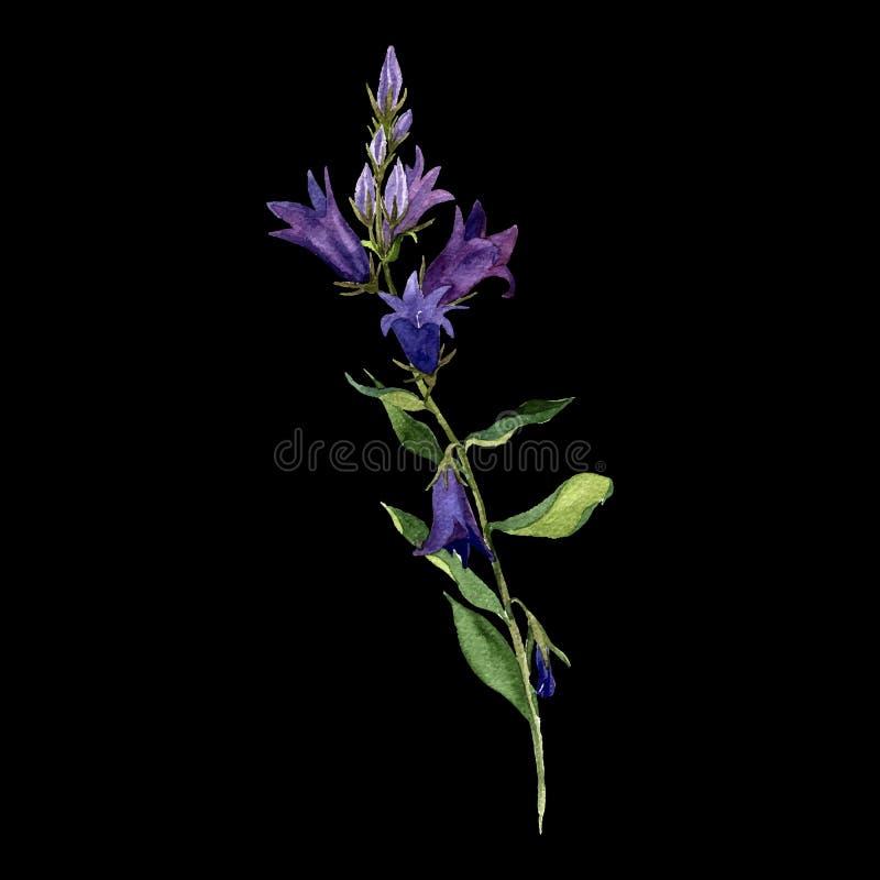 Blommor för klocka för blått för vektorvattenfärgteckning stock illustrationer