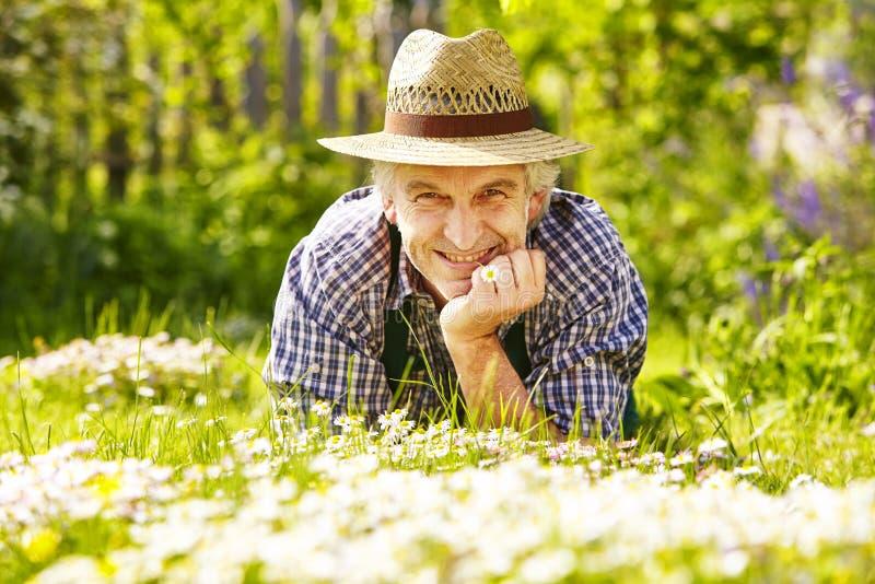 Blommor för manträdgårdsmästareäng royaltyfri fotografi