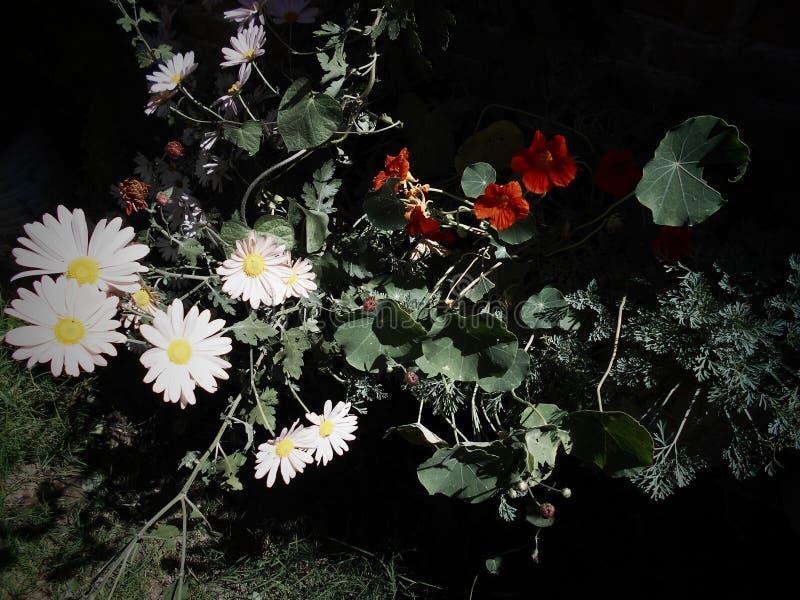 Blommor för moder` s arkivbild