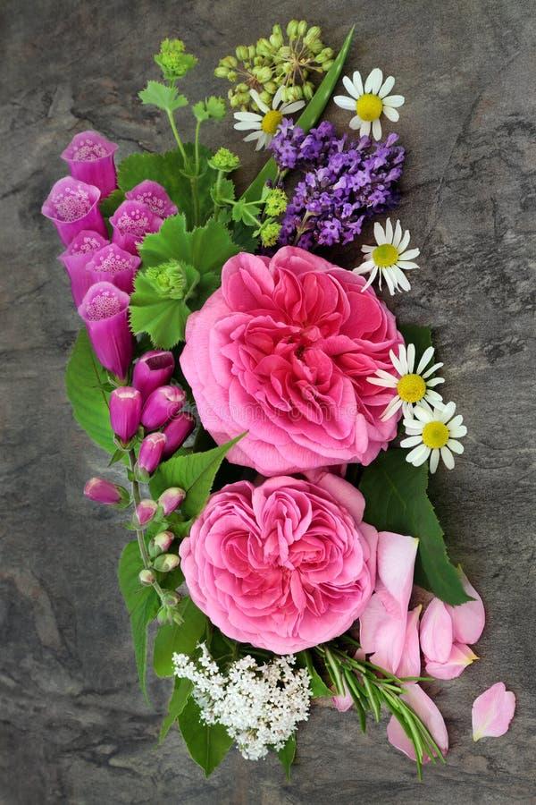 Blommor för naturlig växt- medicin arkivfoto