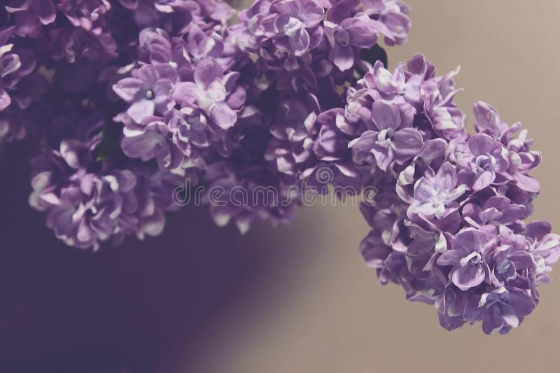 Blommor för naturvårsommar royaltyfri fotografi