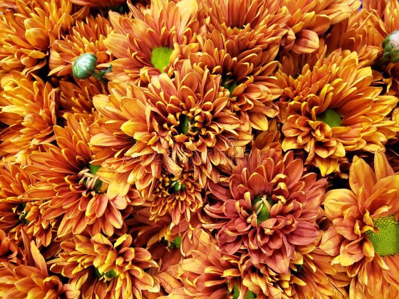 blommor för orange tusensköna i en blom- bukett för gåva av förälskelse, bakgrund och textur arkivbild