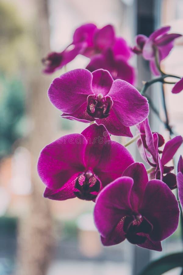 Blommor för orkidé för övre sikt för slut rosa arkivbilder